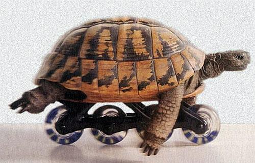 tortue_a_roller
